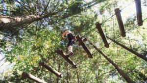 Tree To Tree Adventure Park Idaho